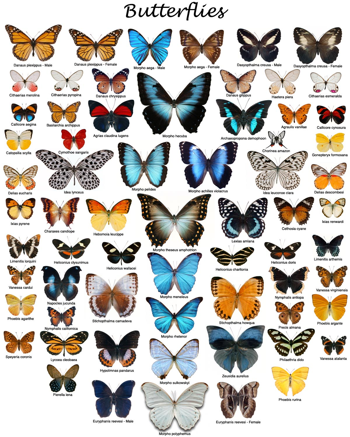 Butterfly Proofs - photo#38